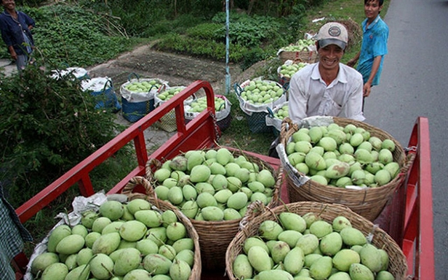 Việt Nam wants to quadruple mango exports by 2030