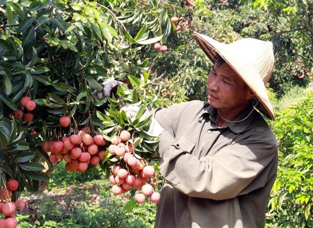 Agro-forestry-fisheries exports up over 24 per cent in Jan-Apr
