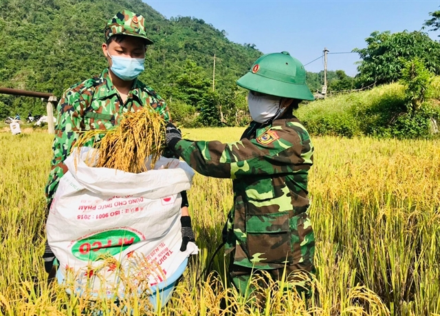 Farmers nationwide busy harvesting during the pandemic