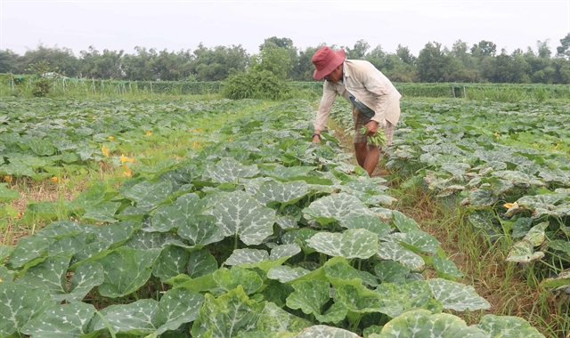 Trà Vinh embraces science technology in agriculture