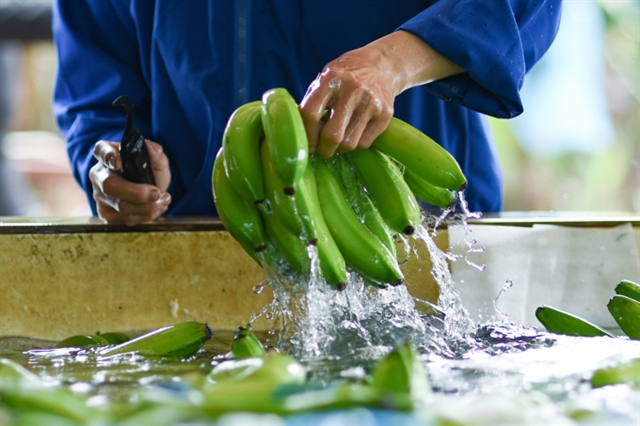 Việt Nam sees high growth of fruit exportsto China in first five months