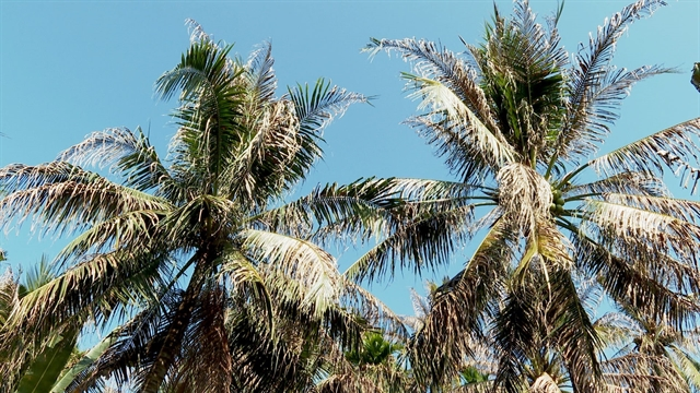 Countrys largest coconut growing province manages to control imported pest