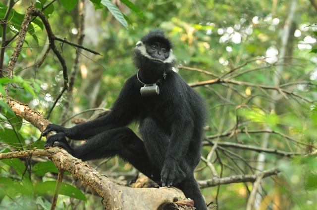 Protected zone established for endangered primates in Quảng Bình