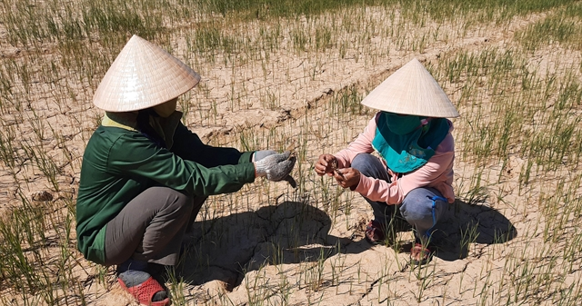 Việt Nam most concerned with human rights in climate change context: Ambassador