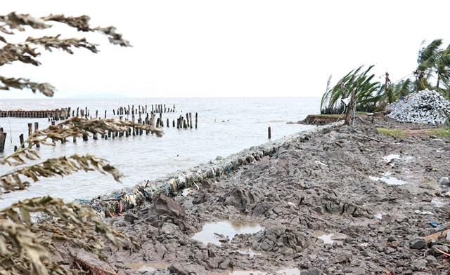 Cà Mau speeds up work on coastal embankments amid erosion threat