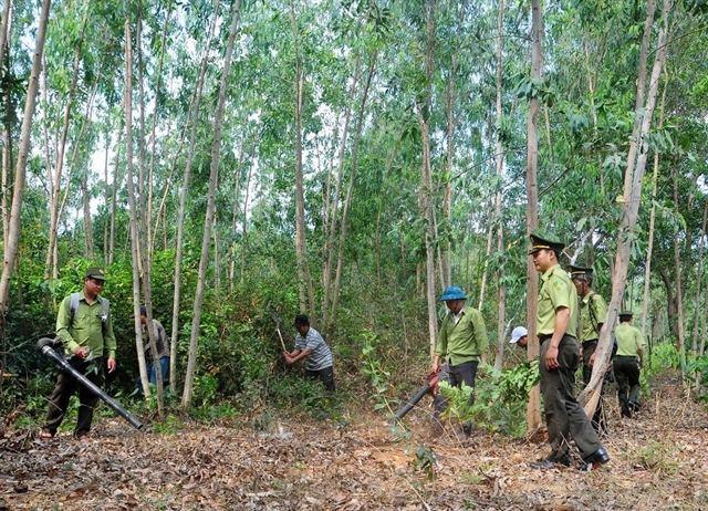 Minister urges localities to prepare to fight forest fires