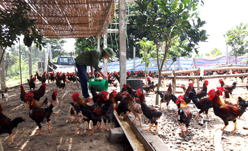 Capital city to promote consumption of husbandry products