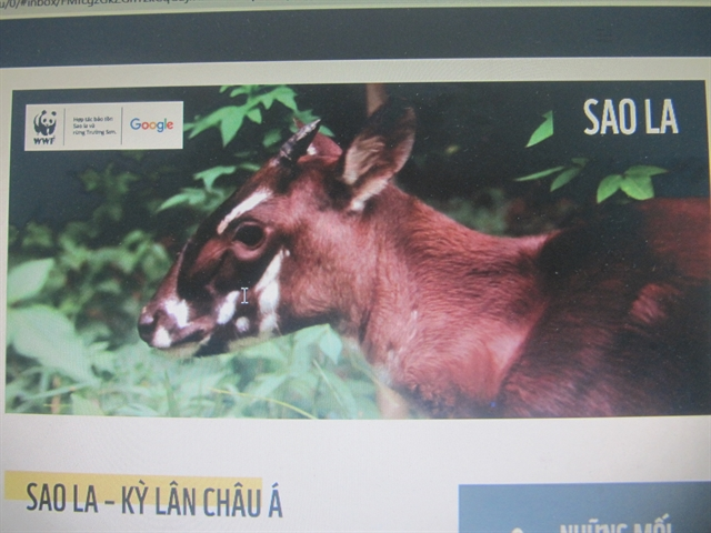 Google WWF-Viet Nam join forces in Saola conservation campaign
