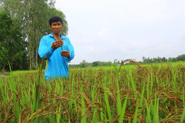 Đồng Tháp farmer delivers organic success