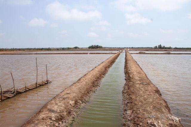 Bạc Liêu Province focuseson developing collective economy