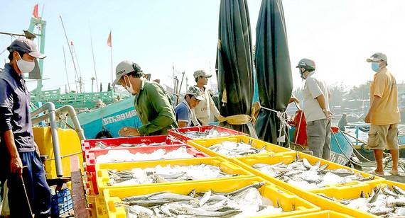 Bình Thuận fishing industry thrives amid pandemic