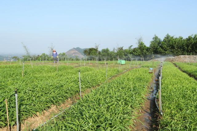 Hà Nội strives to further develop farm economy