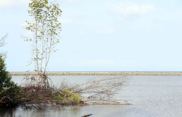 Cà Mau takes measures to prevent erosion adapt to climate change