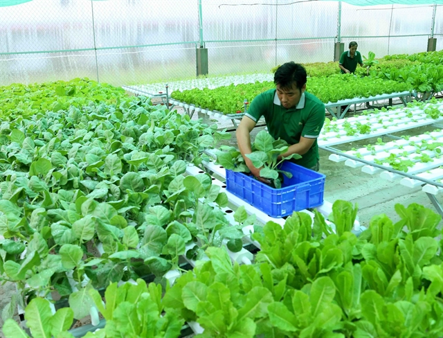 Farming cooperatives cultivateGAP-standard products raise value in Kiên Giang