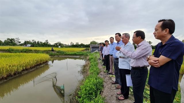 Organic farmsagro-tourismin Bạc Liêu yield higher profits protect the environment