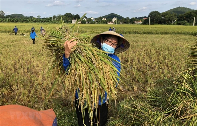 Việt Nam urged to transform food system amid challenges