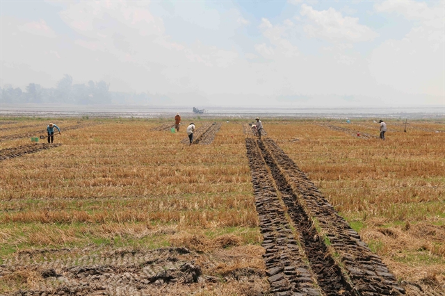 Trà Vinh Province to rapidly improve irrigation to foster agriculture