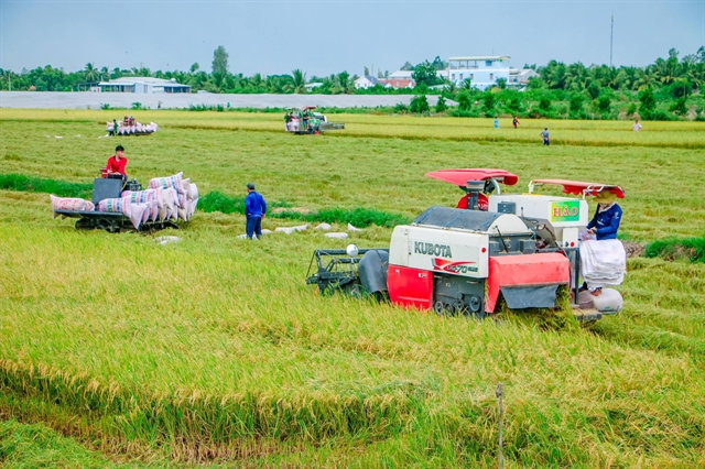 Government should buy summer-autumn rice: MARD