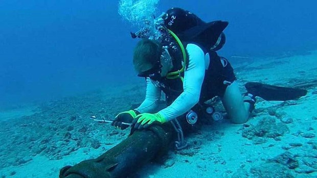 AAG undersea cable fixed restoring internet speed in Việt Nam