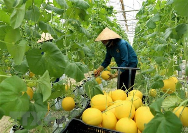 Nine global agritech entrepreneurs supported to scale solutions in Việt Nam