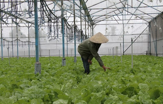 Draft decree offers incentives for investment in agriculture
