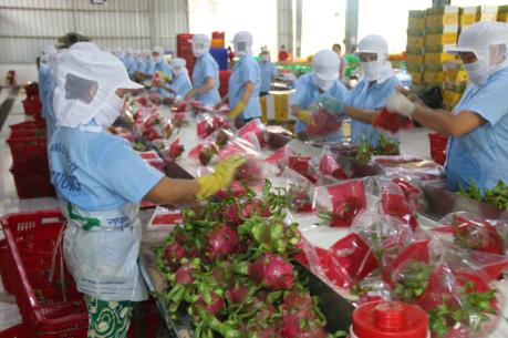 Project looks to bolster Việt Nams dragon fruit exports to Europe