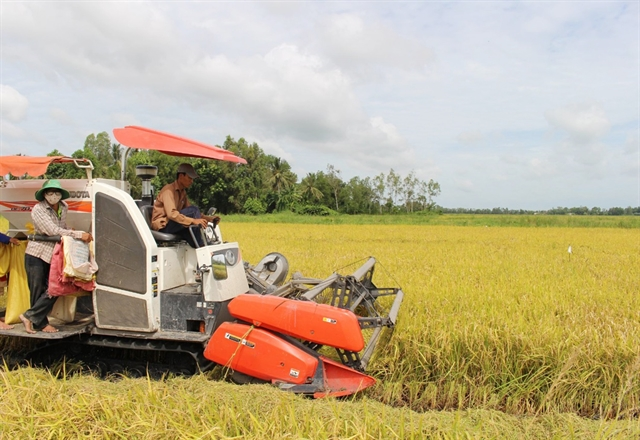Mekong Delta authorities seek to help farmers harvest rice crop amid transport restrictions