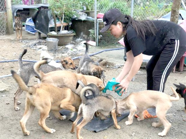 Woman in Đà Nẵng runs shelter for homeless dogs and cats