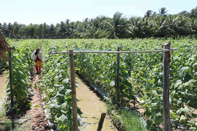 Trà Vinh Province to pay 1.7m compensation to farmers hit by drought saltwater