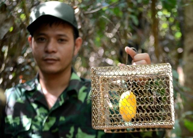 Six-man squad protects animals inSơn Trà Peninsula