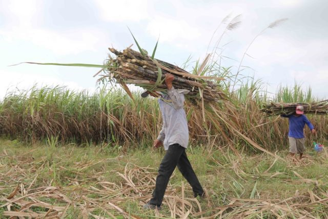 Sugar firms struggle due to ATIGA