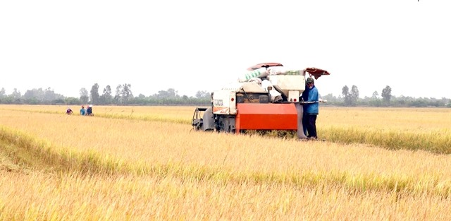 Countrys biggest rice producer raisesproduction efficiency with new farming models