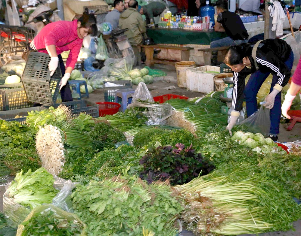 Wholesale market development needs Government support