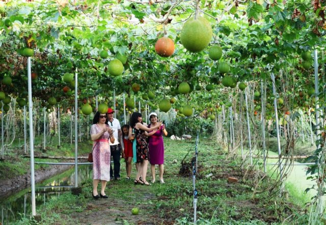 Tripsto southern orchards popular in summerfor urbanites