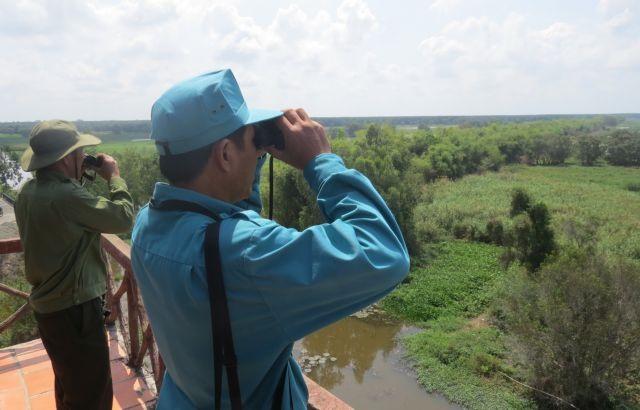Tràm Chim National Parks endangered birds need protection as habitats shrink