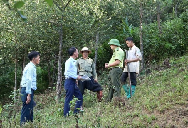 Forests better managed thanks to protection policy