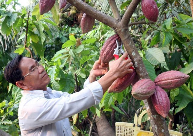 Vietnamese chocolate products have chance to enter to global market