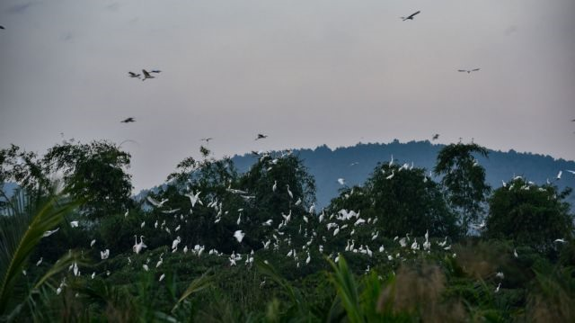Thanh Hóa farmer protects wild birds with his love