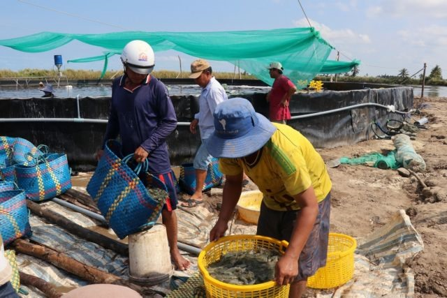 Kiên Giang to expand industrial shrimp farming