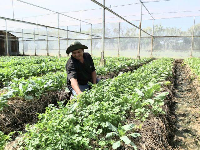 Sóc Trăng depends on efficient farming models to beat climate change