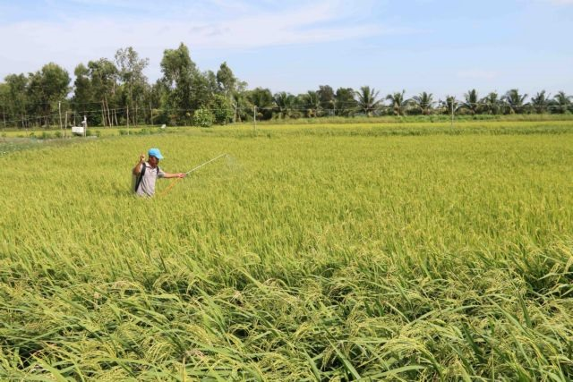 Trà Vinh farmers expandorganic rice areas