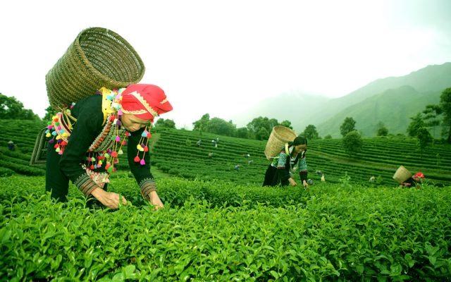 Lai Châu develops community tourism