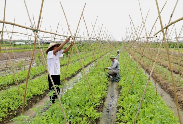 Hà Nội agriculture forecast to grow at least 3 per cent in 2021