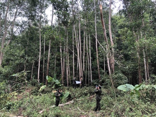 Forestry sector aims to gain 14b exports in 2021