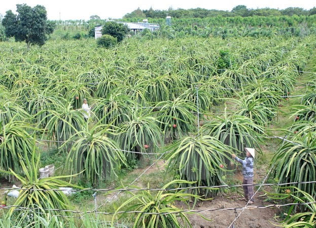 Farmers urged to usehigh-tech practicesto enter global value chains