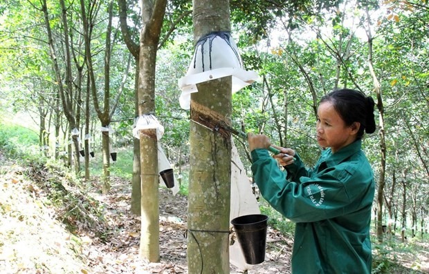 Việt Nam earns 817 mil from rubber exports in four months