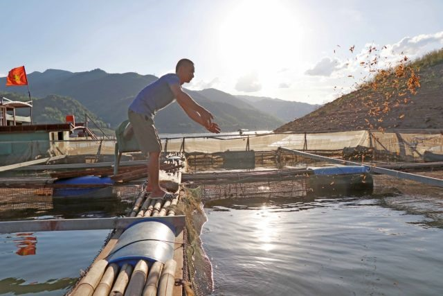 Fish farmers hit hard by reservoirs unstable water levels