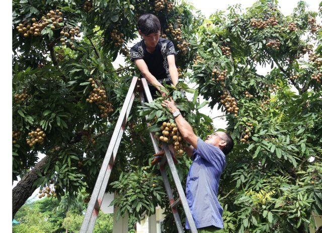 Conference to promote Hưng Yêns farm produce