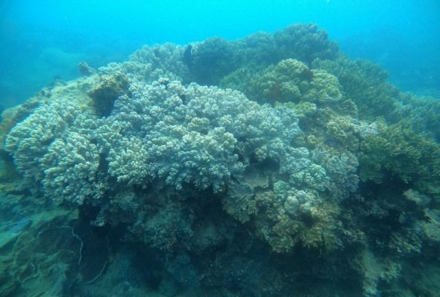 Local community takes lead in protectingBình Địnhs coral reefs