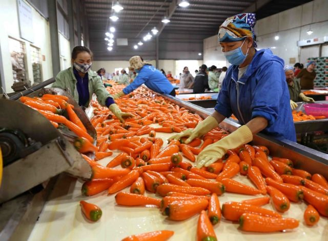 Việt Nams agriculture sector gains export growth in H1